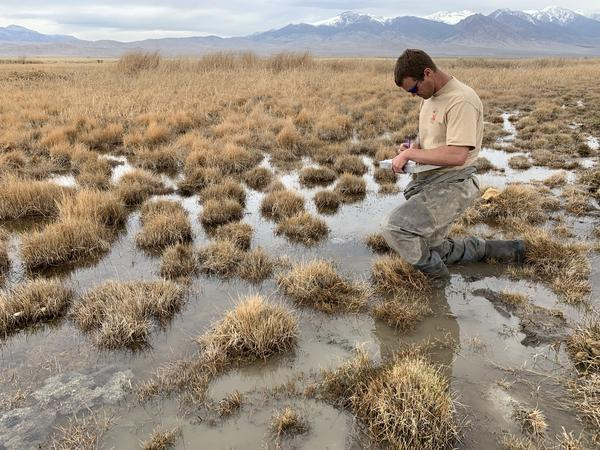 In The Mountains And Deserts Of Utah, Columbia Spotted Frogs Are Sentinels Of Climate Change