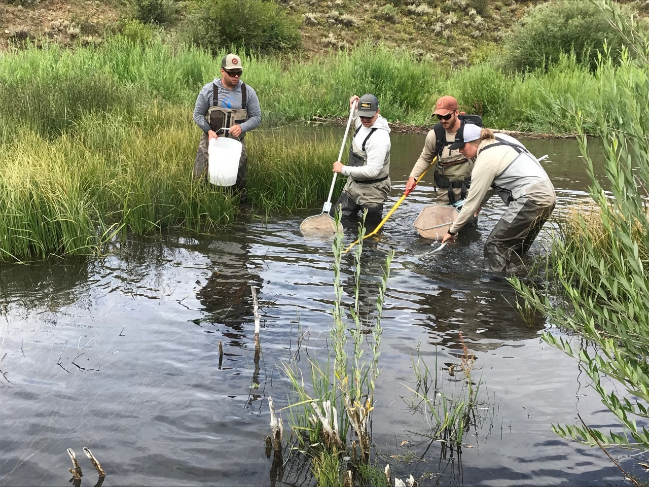 UTAH STATE UNIVERSITY BHA HELPS WITH INVASIVE SPECIES REMOVAL AND RESEARCH