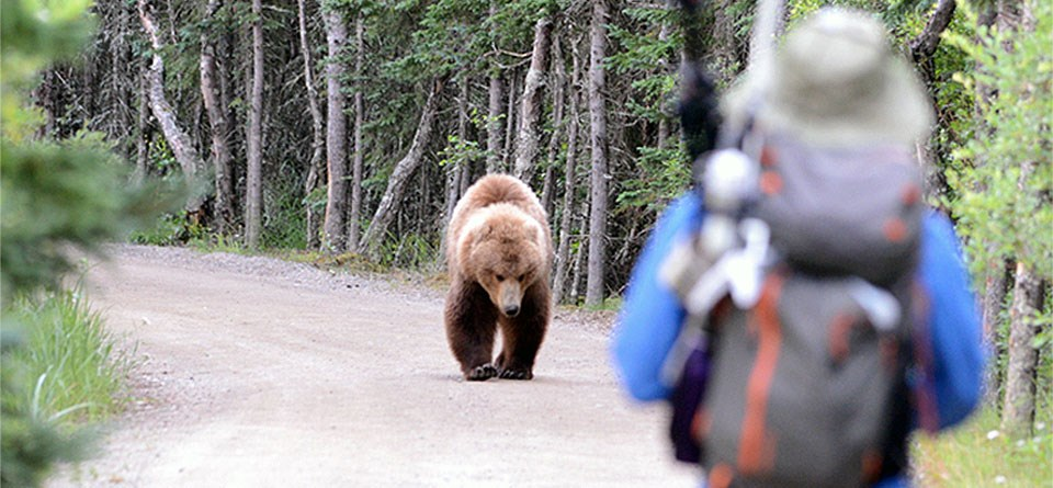 Using Science to Persuade Hikers to be Bear-Safe in Yellowstone